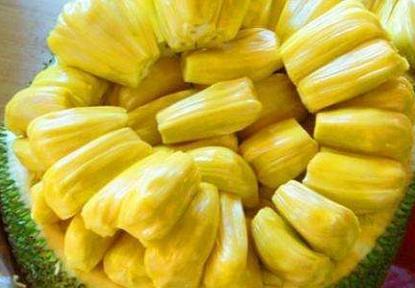 菠萝蜜的营养价值 哪些人不能吃菠萝蜜